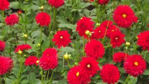 Blume 02